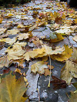 Croissy-sur-seine, Autumn, The Leaves On The Floor