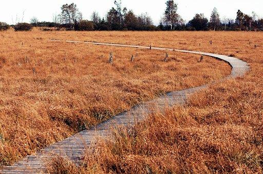Moor, Autumn, Landscape, Nature Reserve, Belgium, Venn