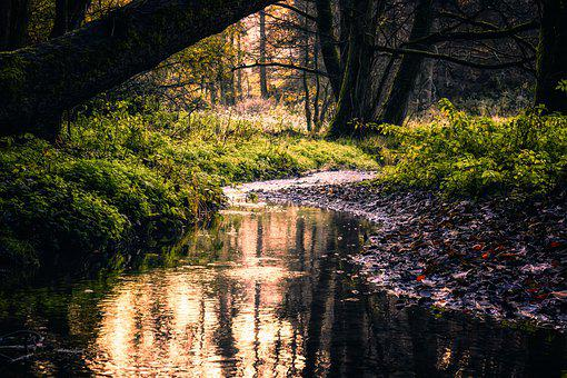 Forest, Bach, Creek, Atmosphere, Mystical, Mood