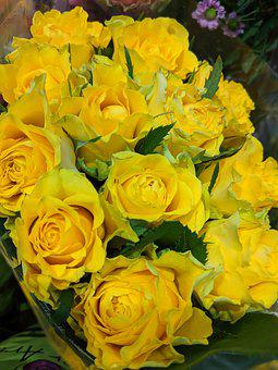 Roses, Yellow, Flowers, Cut Flowers