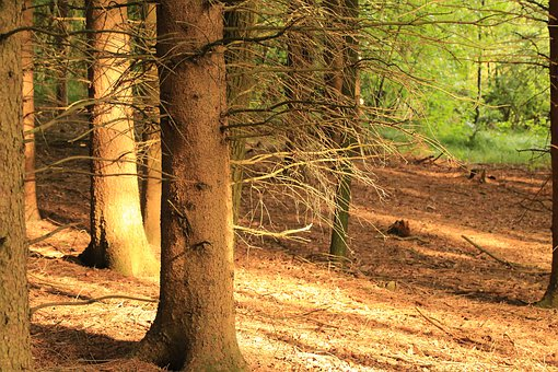 Forest, Ground, Nature, Forest Floor, Away, Trees