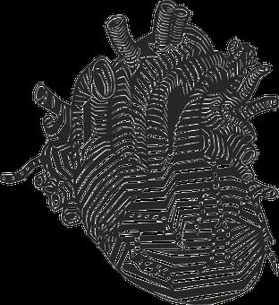 Heart, Veins, Arteries, Anatomy