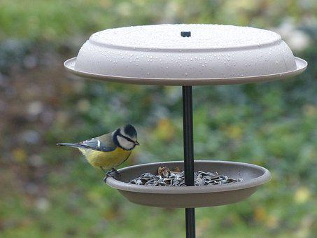 Tit, Manger, Seeds, Winter, Bird, Feed, Garden, Birds
