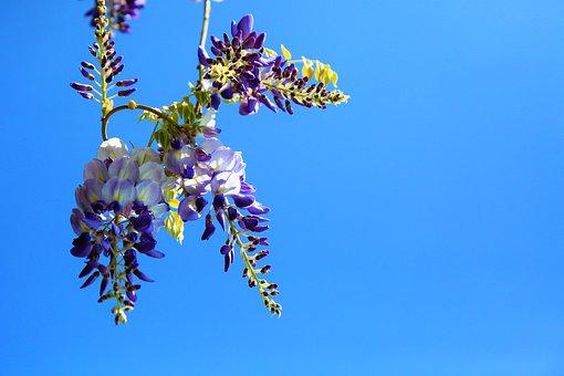 Flower, Spring, Nature, Plant, Color, Nice, Purple