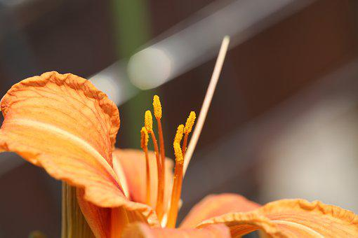 Flower, Red, Yellow, Orange, Color, Nature, Landscape