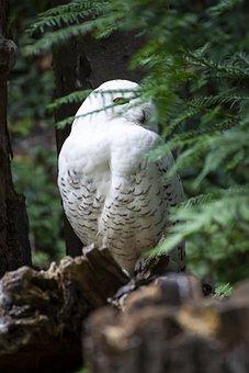 Owl, Own, Bird, Nature, Animal, Plumage, Flying, Bill