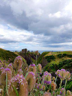 Flowers, Scotland, Clouds, Castle, Ruin, Bee