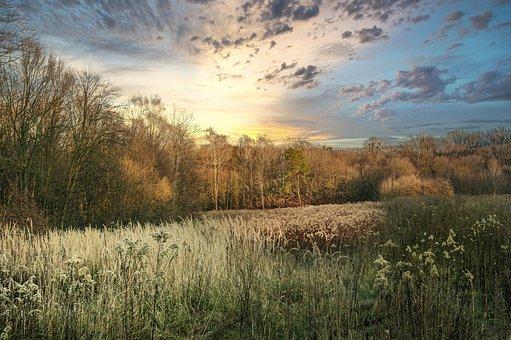 Grass, Sunset, Nature, Field, Landscape, Sky, Tree