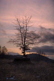 Tree, Sunset, Landscape, Nature, Sky, Twilight, Evening