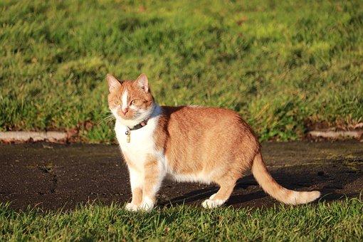 Cat, Sunny, Day, Kitten, Summer, Vacation, Cute