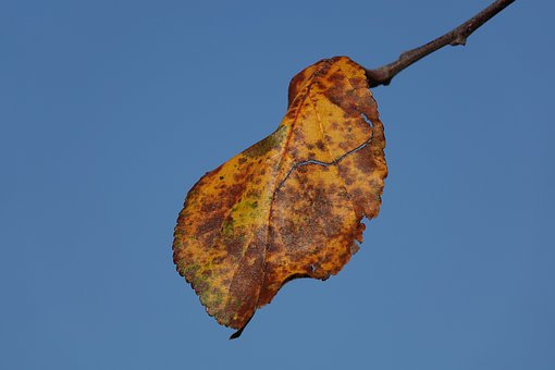 Leaf, In December, Left, Winter, Blue Sky, Season