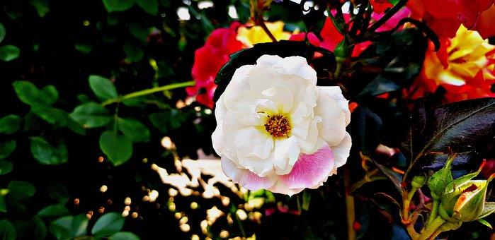 Flowers, Cute Flower, A Roundish Flower, Natural Flower