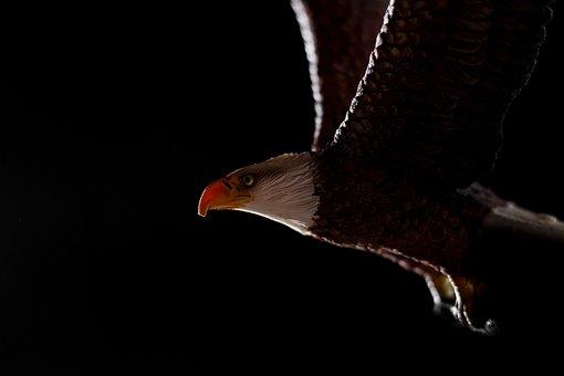 Adler, Wood Carving, Animal, Bird, Artwork, Sculpture