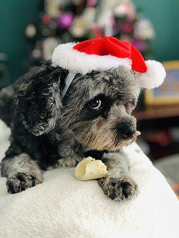 Dog, Cute, Pet, Animal, Adorable, Canine, Domestic
