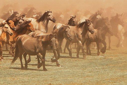 Horse, Wild Horse, Nature, Animal, Wild, Mammal