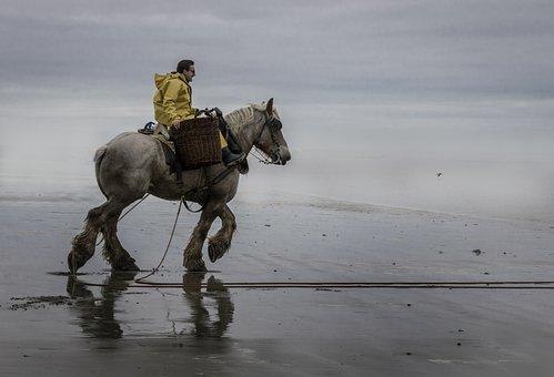 Garanaalvisser, North Sea, Horse, Beach, Shrimp