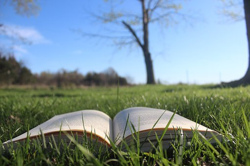 Book, Open Book, Story, Book In Grass, Reading