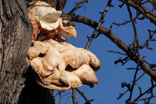 Tree Fungus, Nature, Bark, Wood, Tree, Tribe, Branches