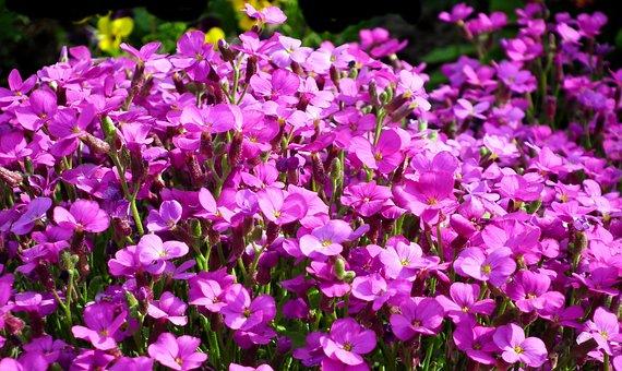 Little Flowers, Nature, Spring, Garden, Closeup