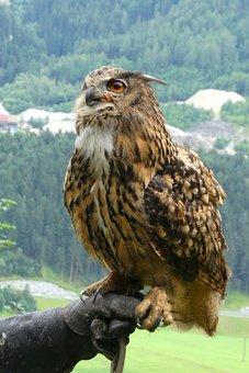 Owl, Eurasian Eagle Owl, Feathers, Eyes, Bird Of Prey