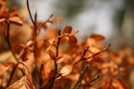 Fall, Blueberry Plant, Orange, Dead, Nature, Plant