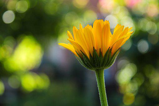 Wildflower, Daisy, Yellow, Bloom, Blossom, Macro, Flora