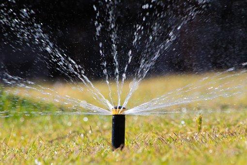 Lawn, Water, Nature, Grass, Green, Dew, Prado, Wet