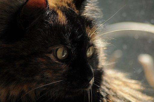 Cat, Furry, Portrait, Home, Sunny, Day, Light, Heat