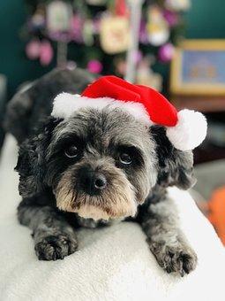 Christmas, Dog, Cute, Pet, Animal, Xmas, Funny, Holiday