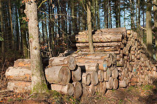 Forest, Holzstapel, Tree Trunks, Timber, Forestry