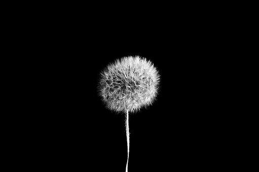 Dandelion, Nature, Seed, Season, Macro, Foreground