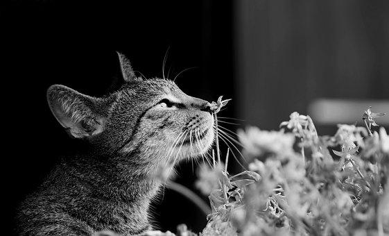 Cat, Flowers, Nice, Kitten, Spring, Pet, Nature