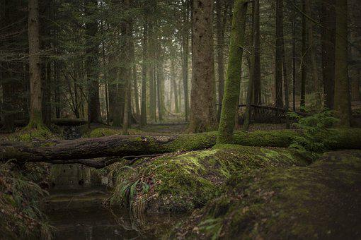 Forest, Trees, Nature, Landscape, Mystical, Autumn