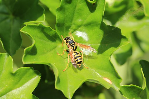 Insect, Fly, Plant, Wasp, Nature, Animal World, Animal