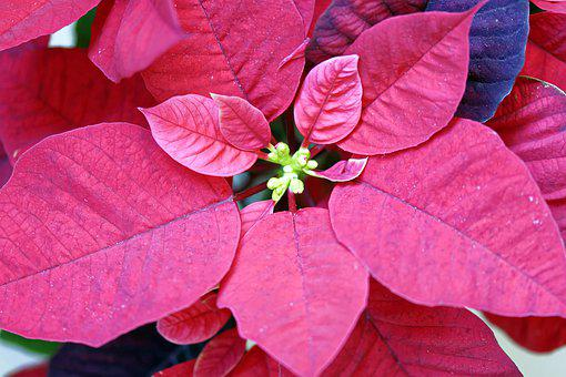 Flowers, Leaves, Red, Plants, Decorative, Interior