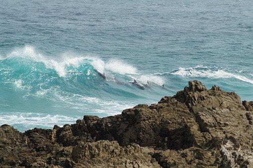 Dolphins, Coast, Sea, Ocean, Rock, Dolphin