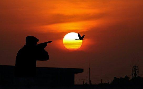 Hunting, Bird, Sun, Dusk, Weapon, Shotgun, Sky, Natur