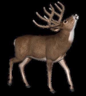 Buck, Deer, Stag, Wildlife, Animal, Nature, Antlers