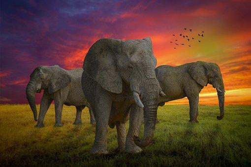 Manipulation, Elephant, Animal, Sunset, Landscape
