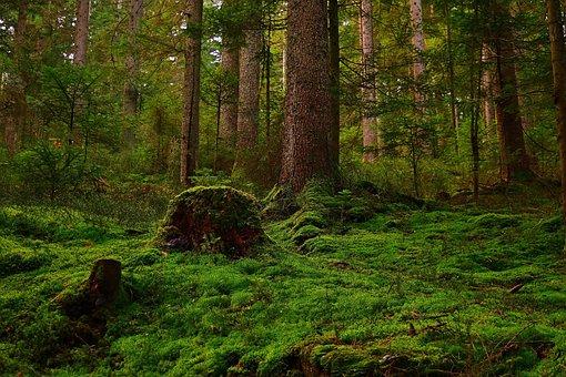 Forest, Moss, Glade, Nature, Forest Floor, Vegetation