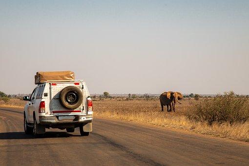 Safari, Jeep Tour, National Park, Africa, Nature