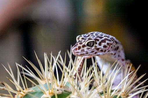 Reptile, Animal, Lizard, Nature, Animal World, Close Up