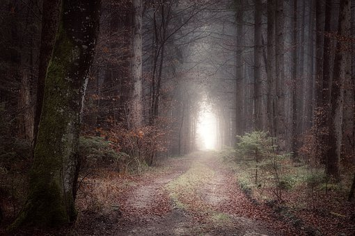 Forest Path, Dark, Mystical, Fog, Forest, Away, Nature