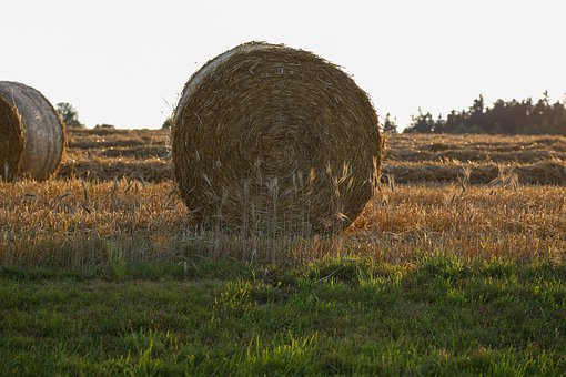 Straw, Straw Bales, Round, Role, Agriculture, Bale