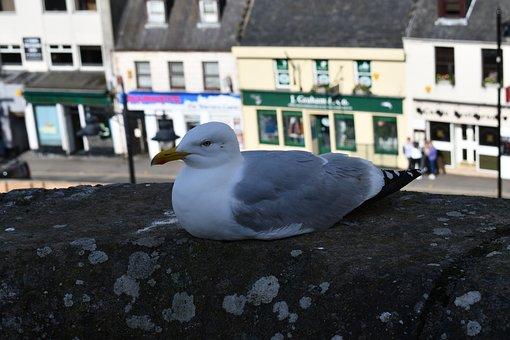 Seagull, Bird, Nature, Wildlife, Seabird, Animals