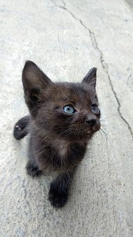 Cat, Black, Pussy, Pussycat, Kitten, Cute, Small