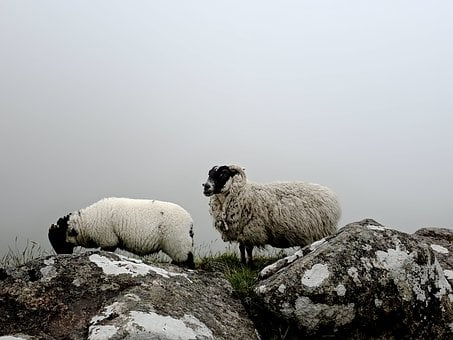 Easter Lamb, Easter Meal, Easter Travel, Lamb, Sheep