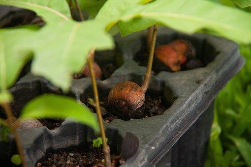 Ecology, Vegetation, Earth, Plant, Reforestation, Acorn