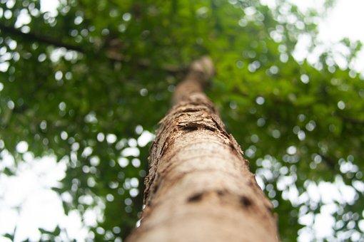 Encino, Ecology, Vegetation, Earth, Plant