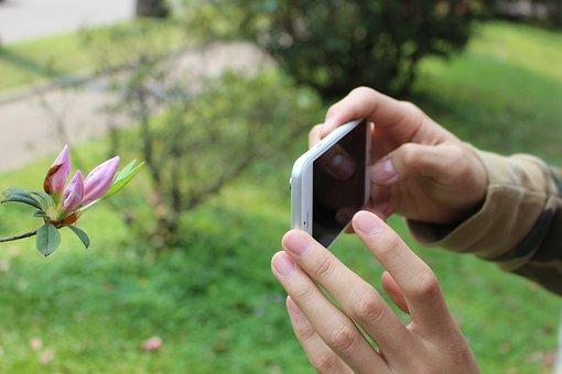 Hand, Mobile, Iphone, Flower, Bud, Shooting